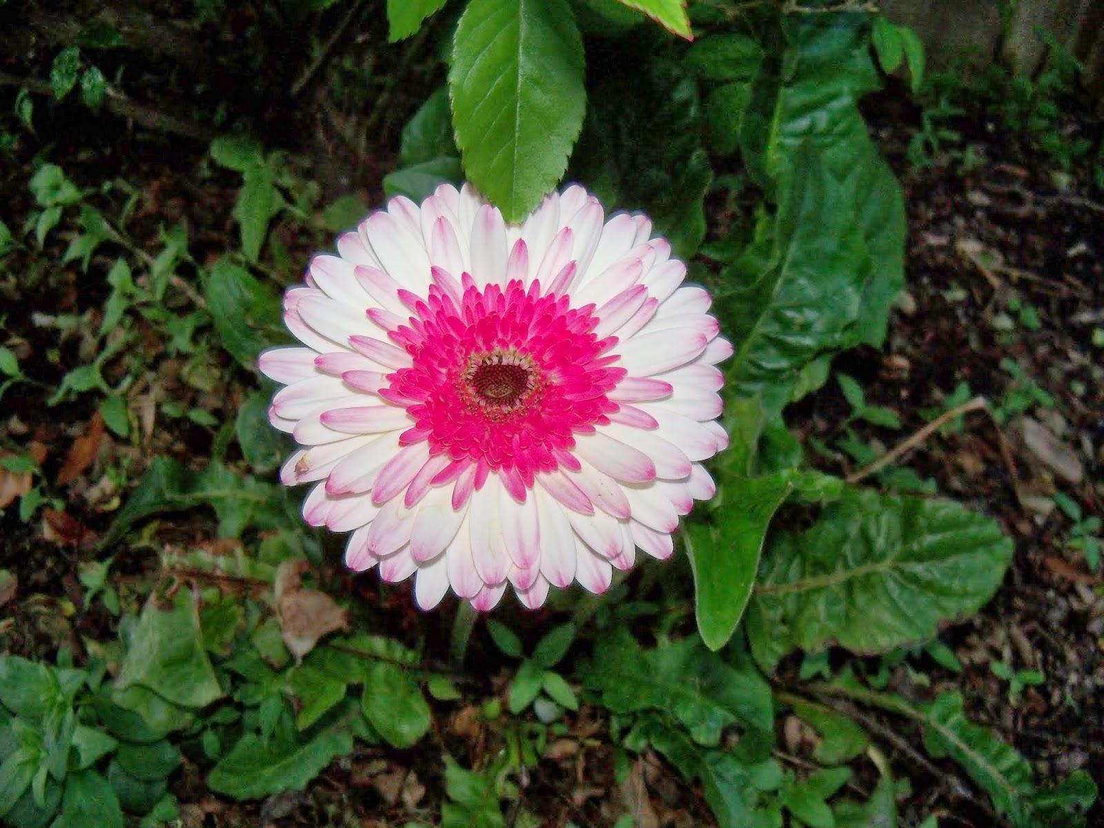 Gardening 2014 - 116_1137.JPG