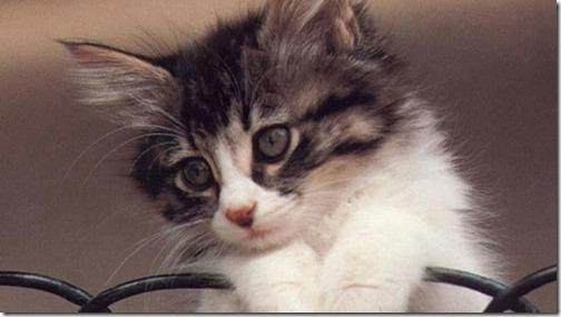 22 fotos de gats (14)