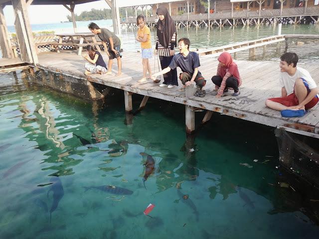 Memberi makan hiu