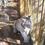 TIGERS Preservation Station - Myrtle Beach - 040510 - 03