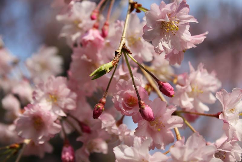 2014 Japan - Dag 10 - marjolein-IMG_1406-0174.JPG