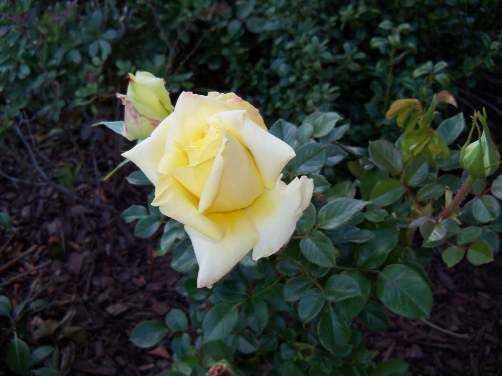 Gardening 2010 - 101_0331.JPG