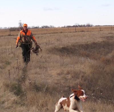 bird dogs and bird hunting