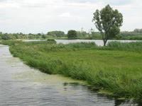 Остер в районе Козельца