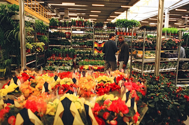 Mercat de Flor i Planta Ornamental de Catalunya - 42280017.jpg