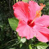 Gardening 2012 - IMG_3850.JPG