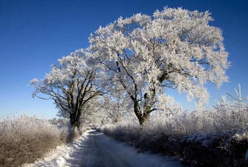 SnowBR32