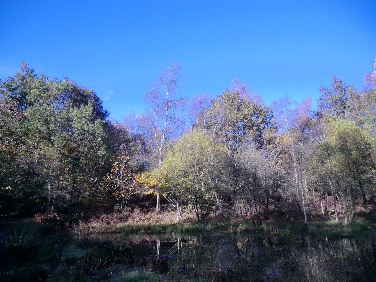 CIMG4924 Spout Pond, Finchampstead Ridges