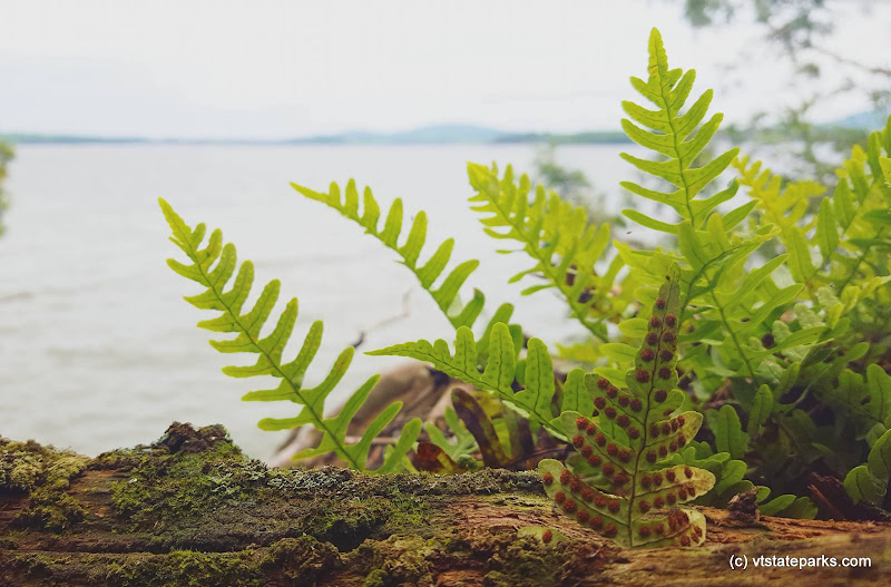 Photo: Fern in front of Lake Champlain at Kingsland Bay State Park by Aswini Cherukuri