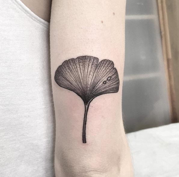 Esta folha