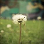 Spring (9 of 25).jpg