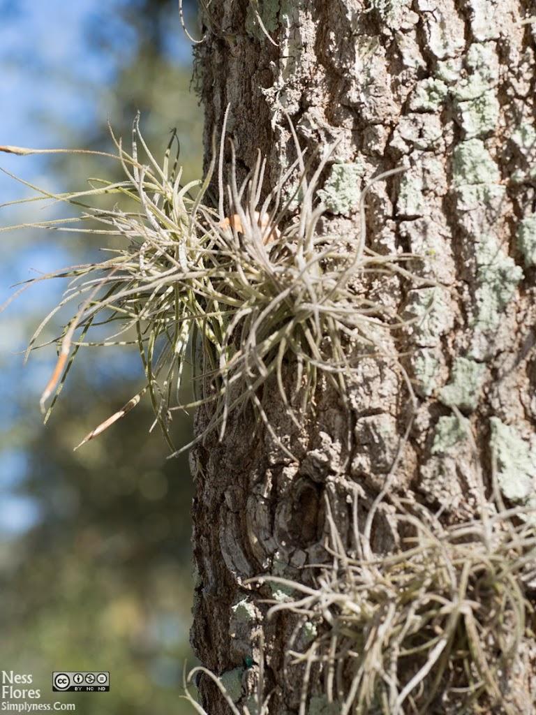 TreeSigma60mmF50-1220056