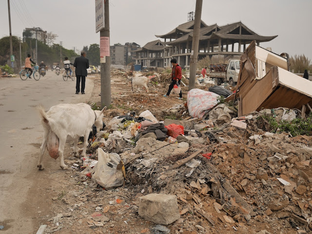 goat eating trash on the ground in Jieyang, China