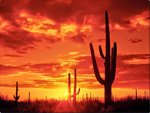 Burning Sunset, Saguaro National Park. Arizona.jpg