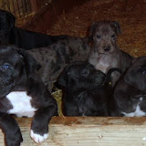 Graysee's brood @ 4 1/2 weeks