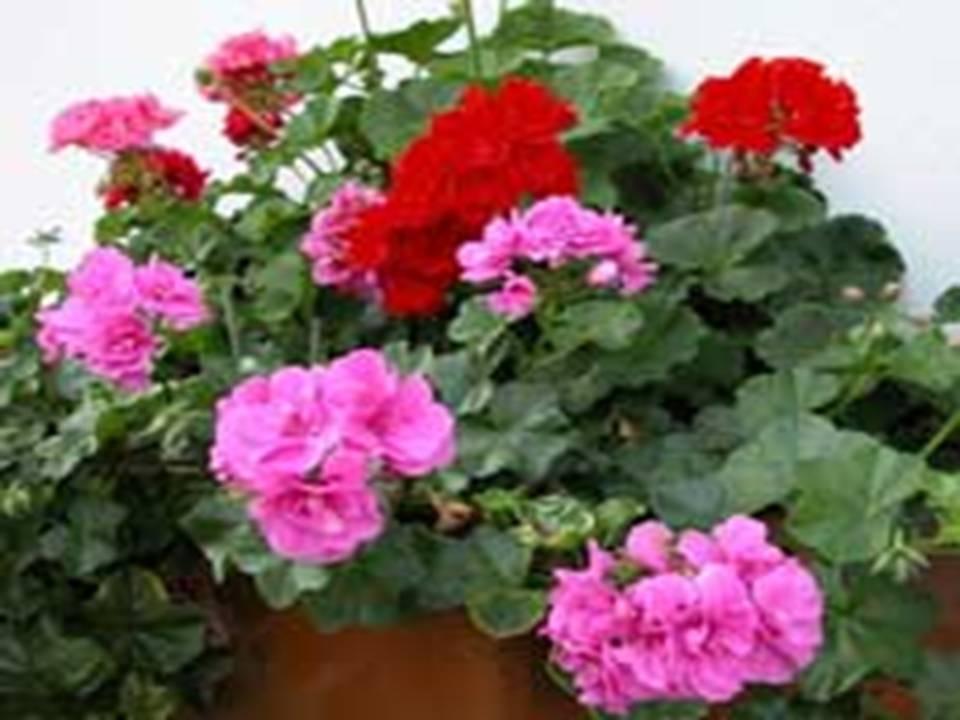 Magia interior un poco de magia de las plantas - Plantas que aguantan temperaturas extremas ...