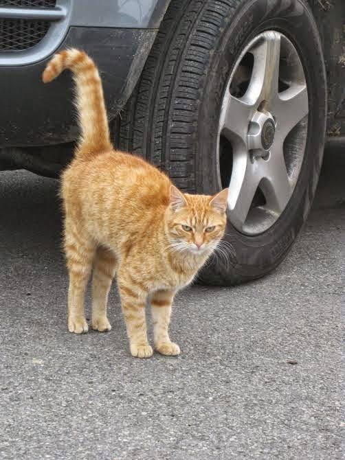Afbeelding van Garfield