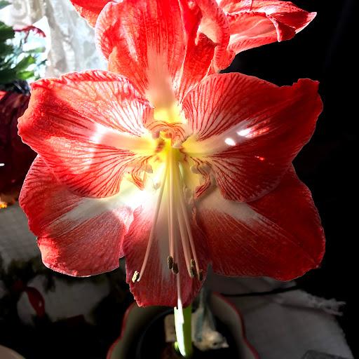 user aldine orndoff apkdeer profile image