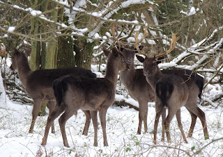 Rudolph's Cousins, Berkhamsted Common. �Christmas Card