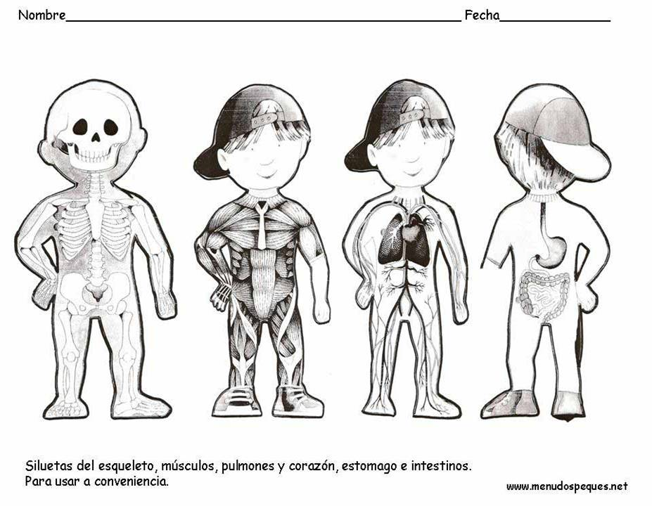 Results for Sistemas Del Cuerpo Humano Imagenes Para Colorear