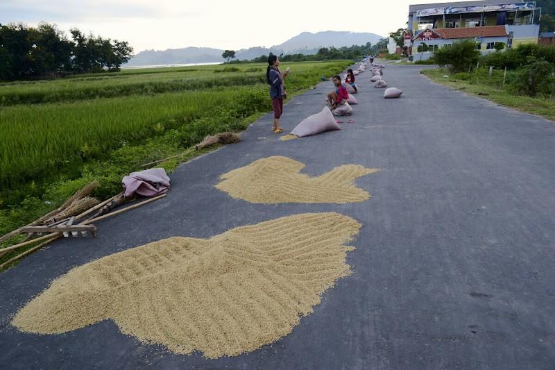 Сушка риса, Вьетнам.