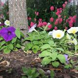 Gardening 2012 - IMG_2753.JPG