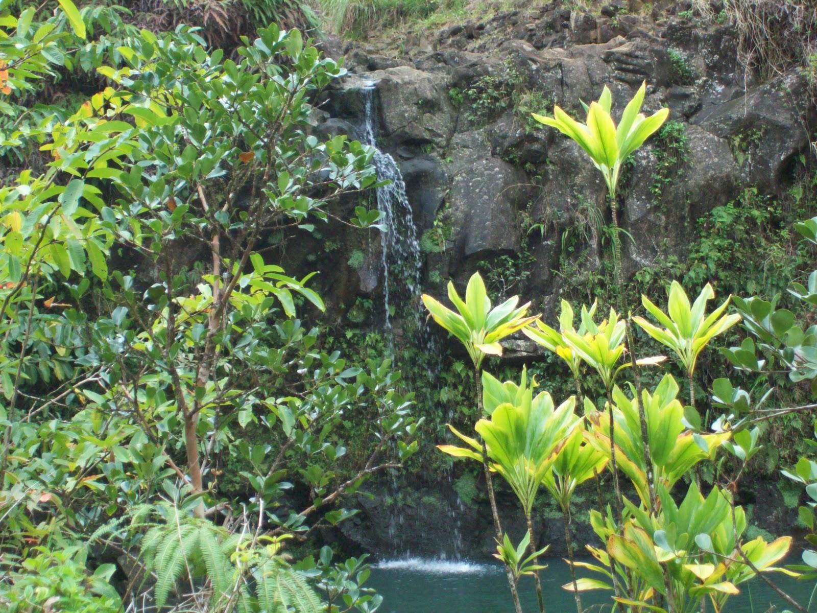 Hawaii Day 5 - 114_1477.JPG
