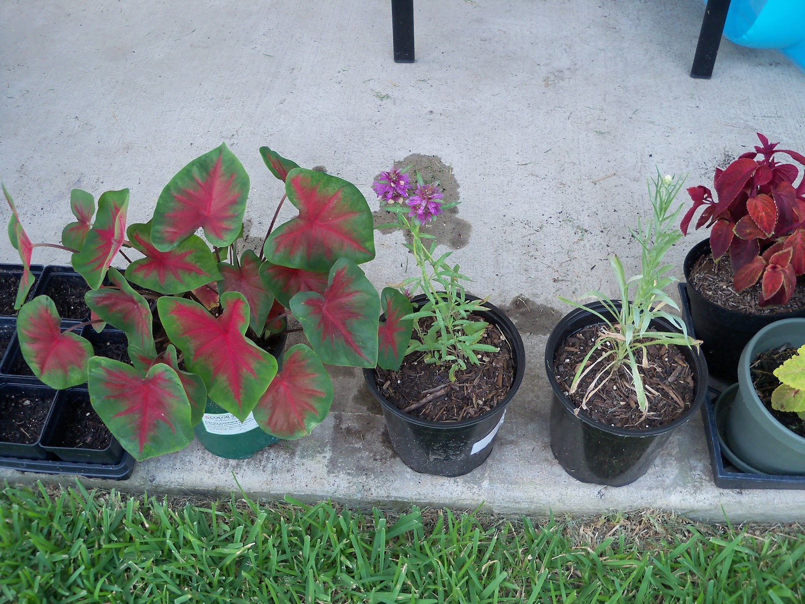 Gardening 2010, Part Three - 101_4916.JPG