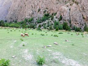 Beautiful meadow with the Rakaposhi view.