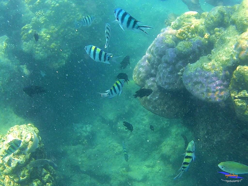 pulau harapan, 5-6 september 2015 skc 050