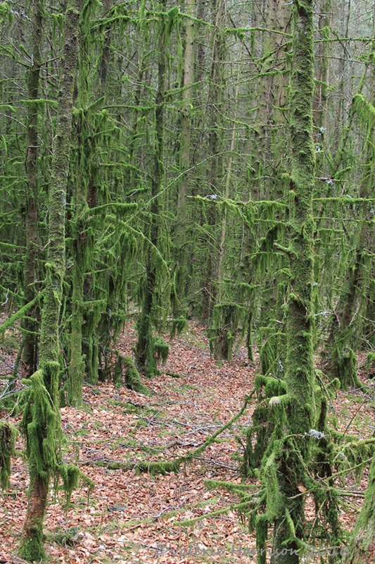 [14-Mossy-forest%5B2%5D]