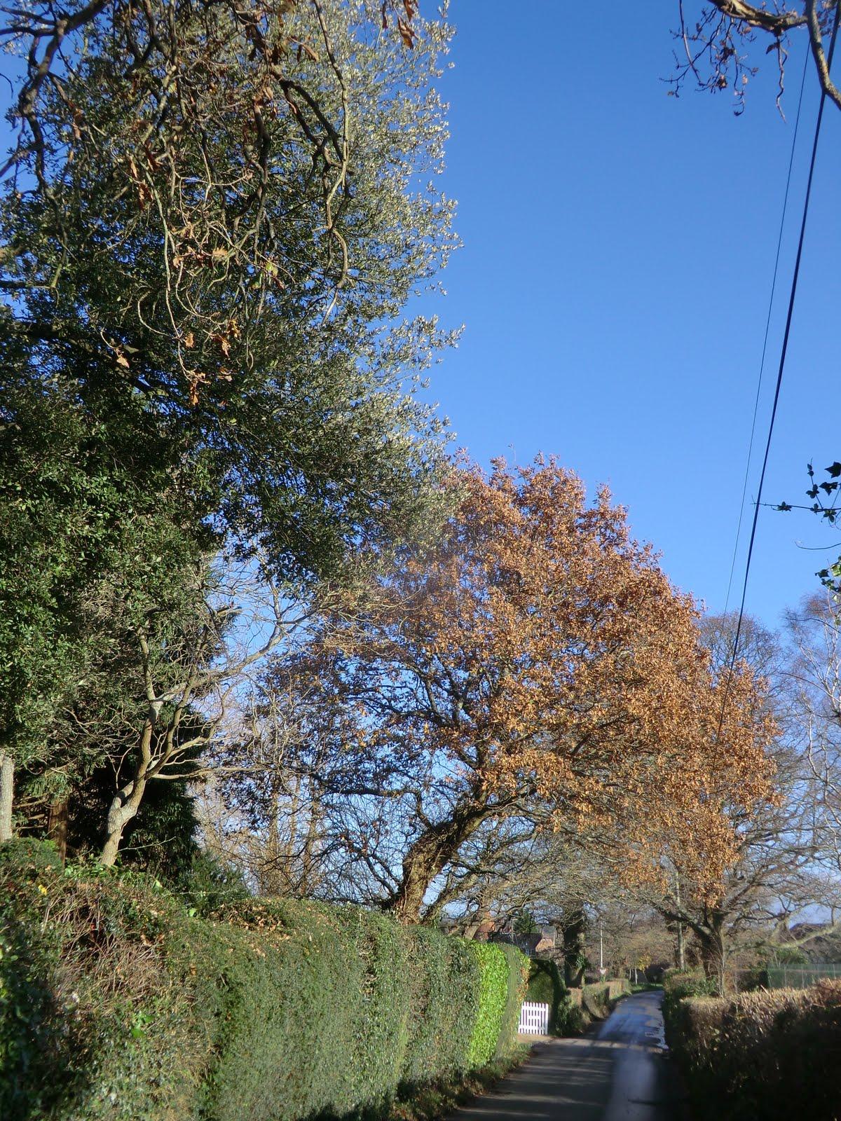 CIMG1807 Fordcombe Lane in winter