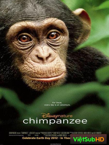 Tinh Tinh Chimpanzee