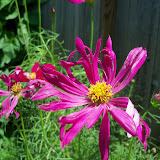 Gardening 2010, Part Three - 101_4380.JPG