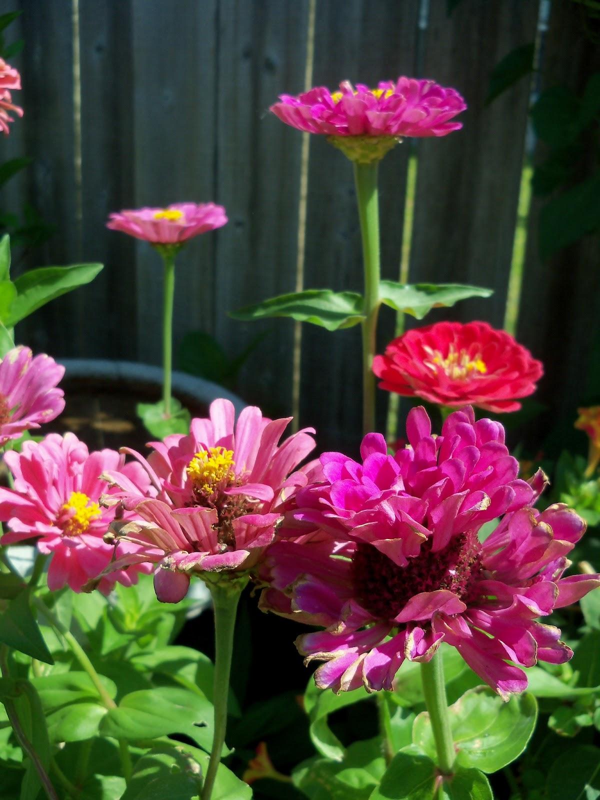 Gardening 2011 - 100_9153.JPG