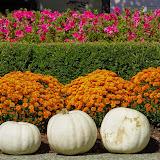 10-26-14 Dallas Arboretum - _IGP4270.JPG