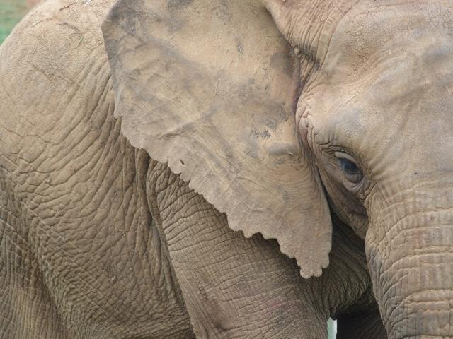 cabarceno.elefante.animales.blog.viajes.cantabria