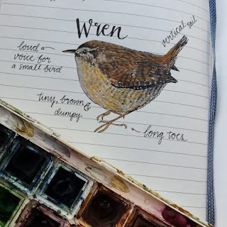 Wren :: www.AliceDrawsTheLine.co.uk