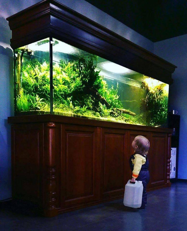 những đứa bé rất dễ bị cuốn hút trước vẻ đẹp của hồ thủy sinh