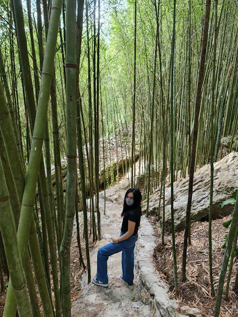 Arashiyama Bamboo Grove  Baguio City