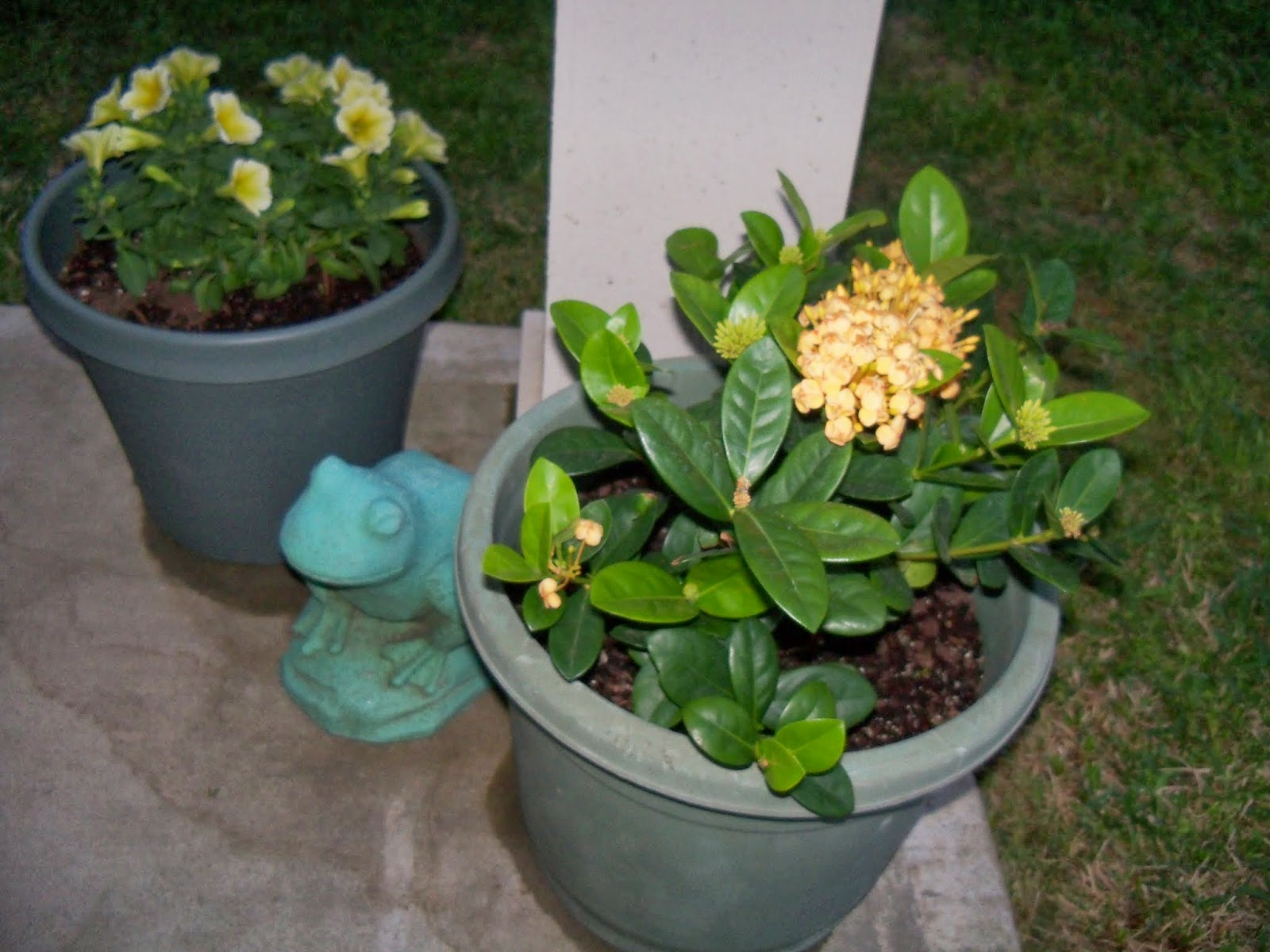 Gardening 2014 - 116_1148.JPG