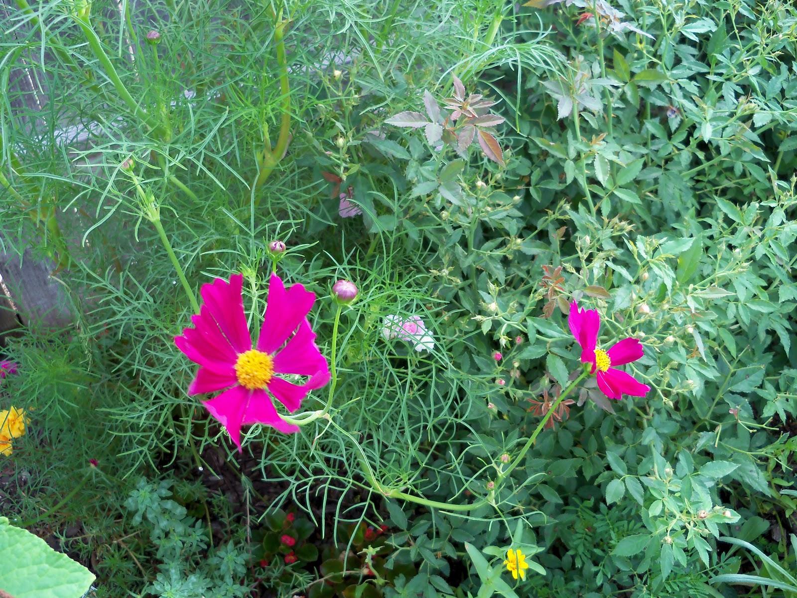 Gardening 2010, Part Three - 101_3732.JPG