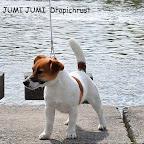 jum_cop (2).jpg