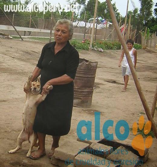 Asistencia Hualcara Cañete terremoto 2007 (6)