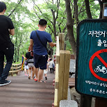 I wouldn't dare - N Seoul tower in Korea in Seoul, Seoul Special City, South Korea