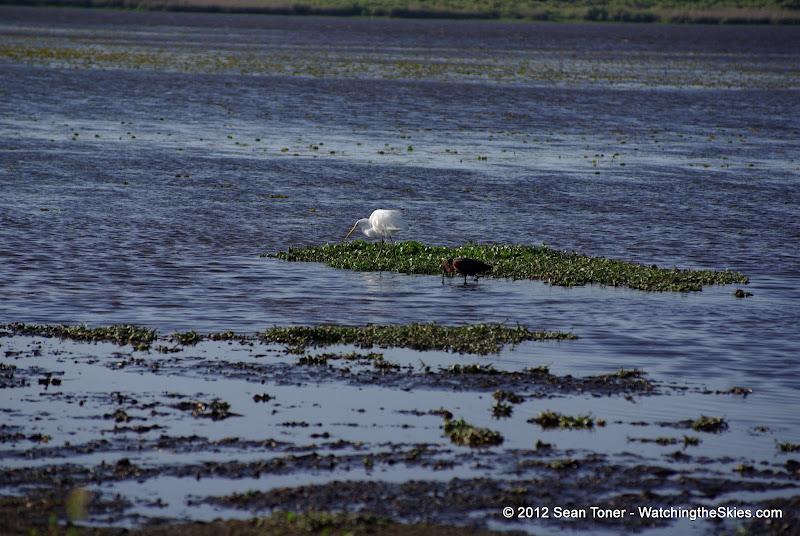 04-06-12 Myaka River State Park - IMGP4457.JPG