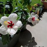 Gardening 2010, Part Three - 101_3878.JPG