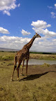 Phone photo - the giraffe was very close