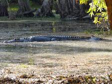 wildlife-crocodile-6.jpg