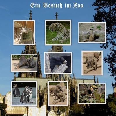 Besuch im Kölner Zoo